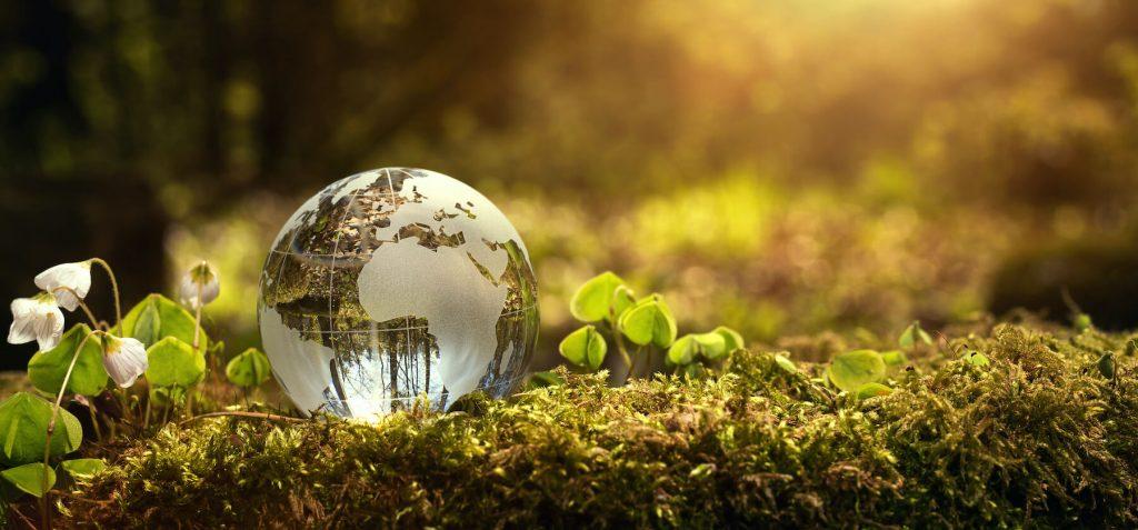 Small glass globe on mossy floor